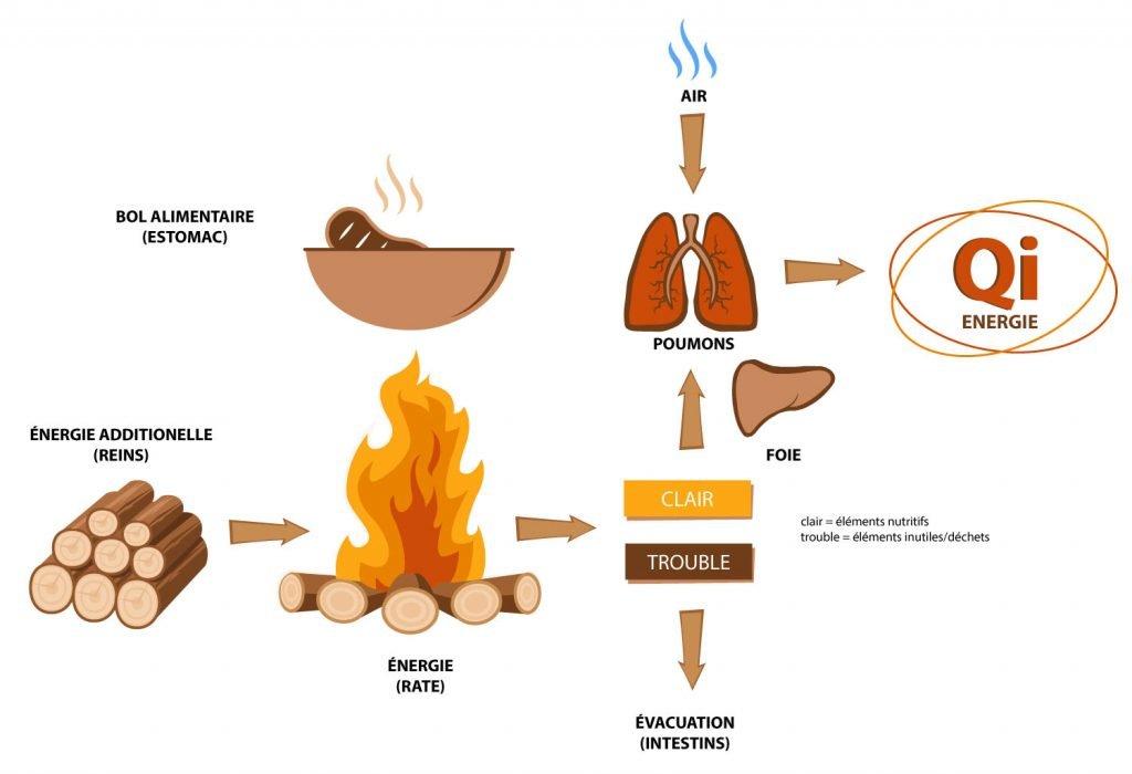 schéma de l'appareil digestif médecine chinoise