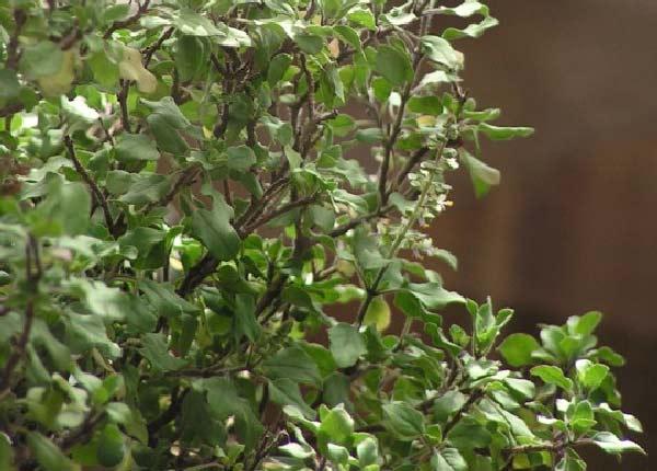 6 Plantes Qui Attirent Les Energies Positives Selon Le Feng Shui