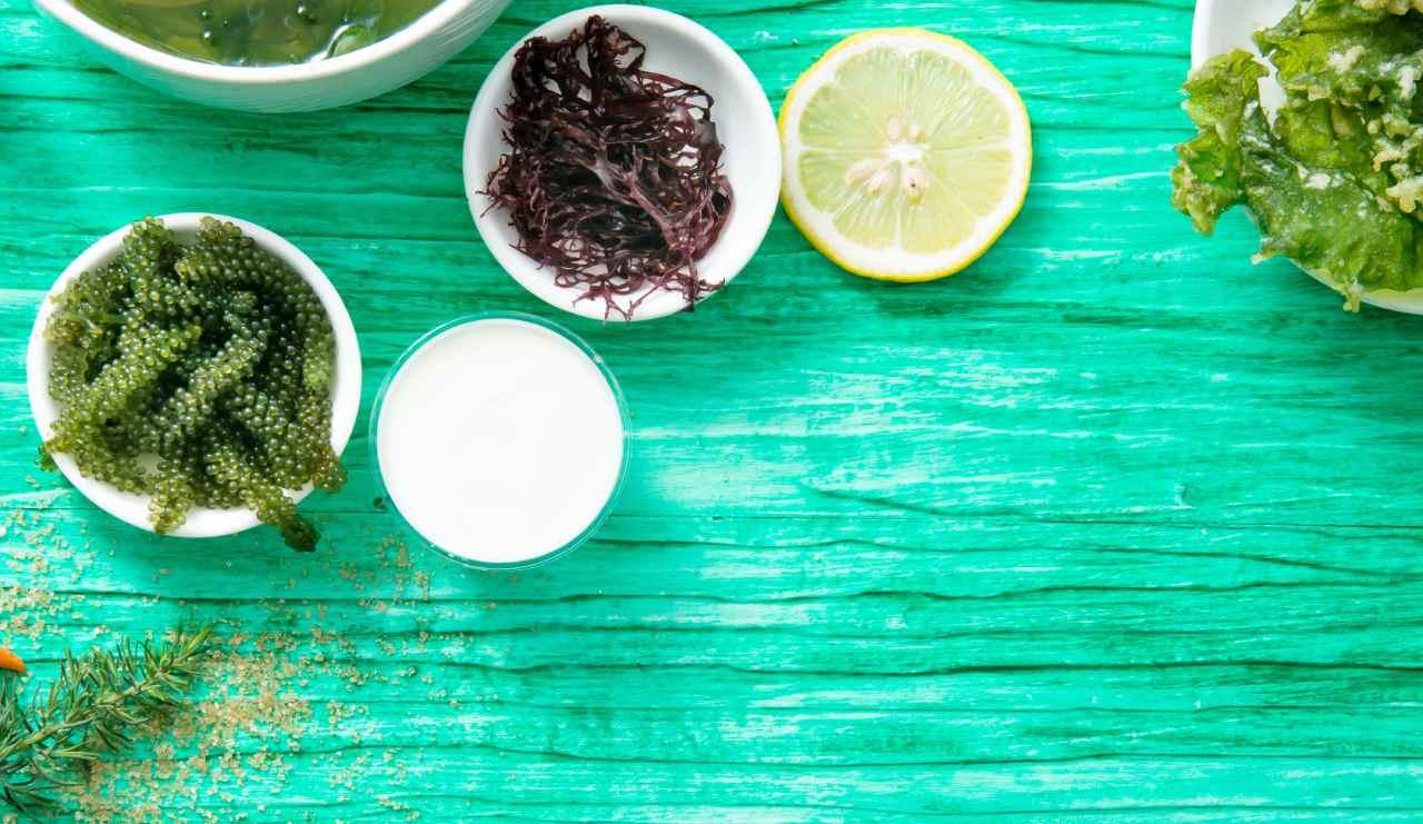 Les bienfaits des super algues comestibles